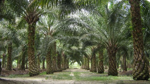 Biodiesel for transport and for generators could be fuelling tropical deforestation.