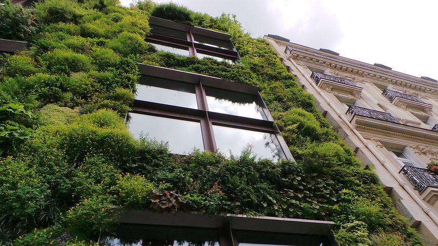 A greenwall - an example of the changes that can be incorporated in to carbon zero buildings.