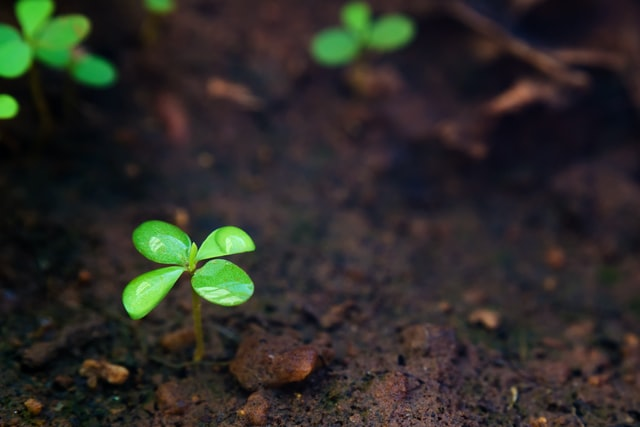 Biochar – The Latest Carbon-Friendly Material